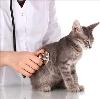 Ветеринарные клиники в Камышине